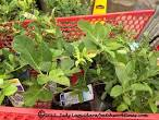 lowes fruit trees
