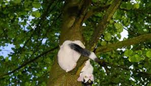 keep a kitten from climbing the tree blue sky