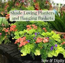 Plants And Planters by Hanging Baskets For Shade