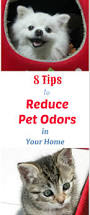 8 tips to reduce pet odors and make your house less stinky