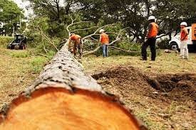 tree removal in virginia chesapeake norfolk va