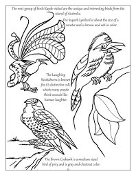 coloring books personalized big bright butterflies and birds