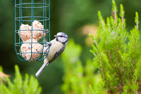 the benefits of feeding the birds