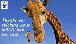 thank you e card thank you ecards world wildlife fund