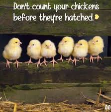 Never Count Your Chicken Before They Hatch Quote Don T Count Your Chickens Before They Re Hatched