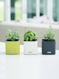 herb planter mini cube self watering herb planter indoor herbs