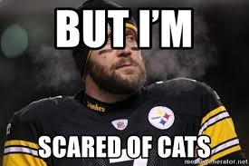 Roethlisberger Memes - but i m scared of cats ben roethlisberger meme meme generator