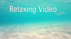 calming music stress relief sleep music study music 癒しの動画