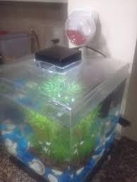 arduino fish feeder 5 steps