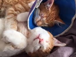Taking Care Of A Blind Cat Two Blind Cat Brothers Have Battled The Odds Together Memeanimal Com