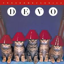 cat photo album devo kitten cover cats cat animal and cat