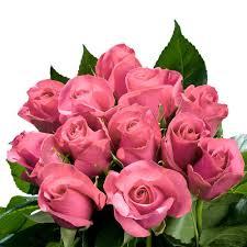 bulk roses globalrose fresh pink roses bulk 100 stems roses pink 100 the