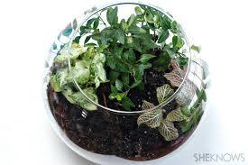 make an indoor terrarium for kids