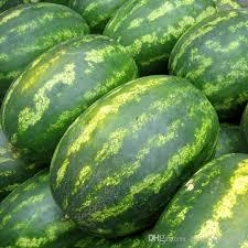 edible fruits big sale watermelon seeds fruit seeds planting watermelon