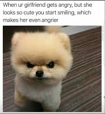 Dog Girlfriend Meme - angry dog girlfriend s angry face funny animal pinterest