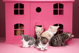 signs of a cat rejecting kittens animals mom me