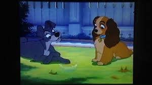 lady tramp 1955 lady meets tramp