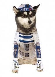 Dog Halloween Costumes Girls 466 Dog Costumes Images Animals Dog Costumes