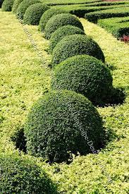 Garden Shrubs Ideas Shrubs Formal Garden Planting Ideas
