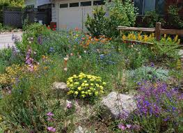 cape cod native plants native plant landscaping ideas backyard fence ideas