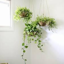Indoor Vine Plants Vine For Two Please 6 Indoor Vines To Enchant Your Home