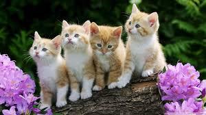 black and white newborn kittens wallpaper