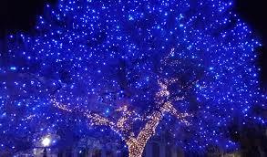 big blue tree