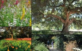 Santa Ana Botanic Garden by Game Of Thorns By Rancho Santa Ana Botanic Garden U2014 Kickstarter