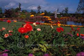 canada flowers flower garden vancouver bc canada pictures images gunter marx