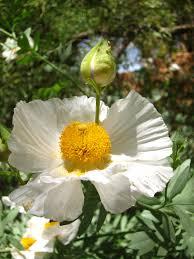 native san diego plants california perennials best perennials for your garden install