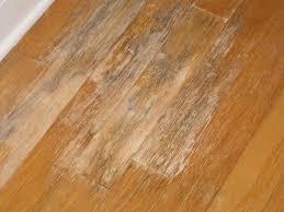 mold growing on hardwood floors flooring page 3 diy chatroom