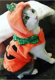 in costumes best 25 costumes for cats ideas on cats in