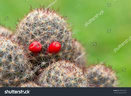 halloween cactus red eyes ghost nature stock photo 206101537