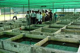 naqda ornamental fish centers our centers naqda
