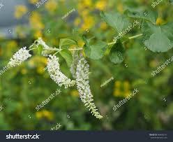 beautiful tiny white flower bunch on stock photo 464636741