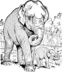 elephant bath coloring coloring