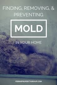 finding removing and preventing mold in your home