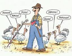 best 25 thanksgiving humor ideas on turkey jokes