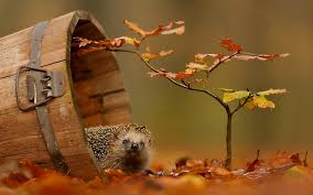 high definiton desktop wallpapers nature animals fox wall best 4k animal images apple autumn wall murals animals dangerous
