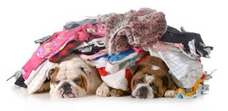 Bed Bugs Smell Bad News Bed Bugs Like The Smell Of Your Dirty Laundry Popular