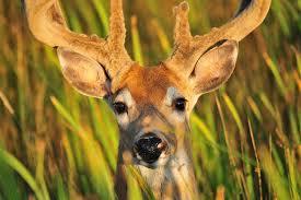 protect bird feeders from deer keep deer away