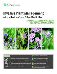 native alberta plants alberta flowering rush symposium u2014 techline invasive plant news
