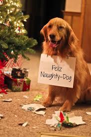 cute dog christmas cards ne wall