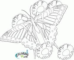 100 butterfly coloring pages print free coloring pictures of