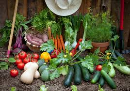 Starting An Organic Vegetable Garden by Gardening For Beginners U2013 Food And Thought