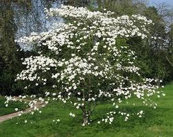 attractive ornamental flowering trees root simple