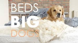 Dog Sofas For Large Dogs by Best Dog Beds For Large Dogs Guide U0026 Recommendations Herepup