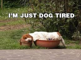 Tired Meme - meme alert dogs comediva
