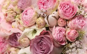 instagram pinkpeonies 100 pink peonies instagram peonies party u0027s and pink