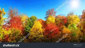 panorama multicolored trees autumn sun shining stock photo